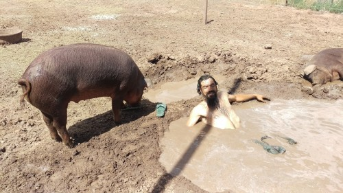 Ethan in pig pool